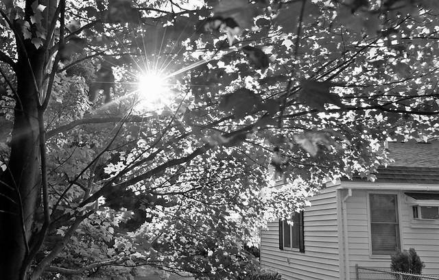 Bokeh Under The Maples-HMBT