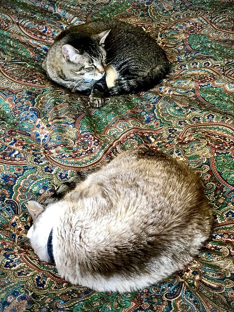 Anticlockwise and clockwise naps