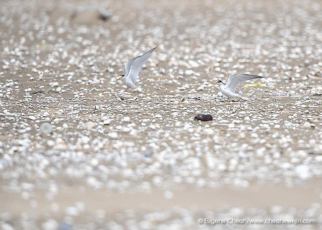 EAAF101 Yubu-do Tidal Flat