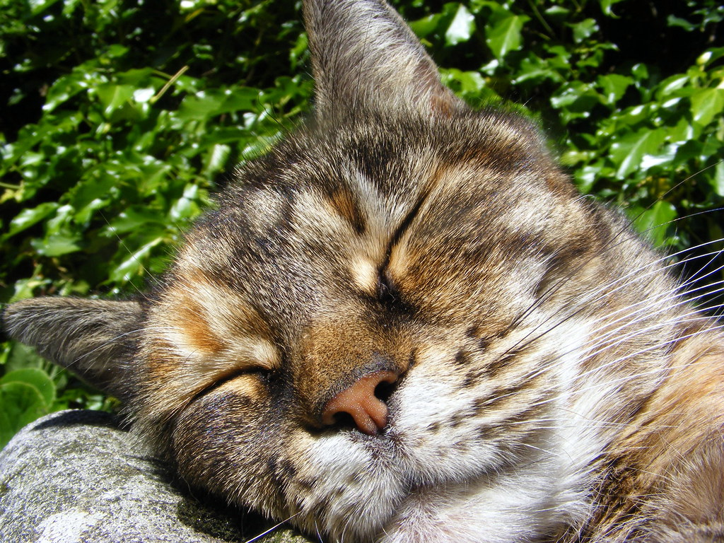 Sleeping Beauty..Erica.xxx   Fast asleep in the garden