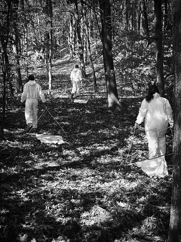 toronto people white tree forest bw canon eos60d