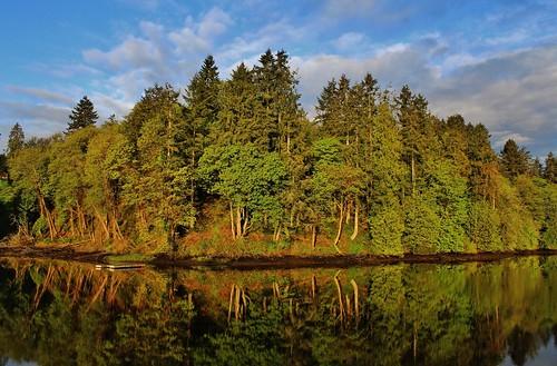 olalla olallawashington bay washington washingtonstate morning beautifulmorning trees tree lagoon pugetsound puget water forest