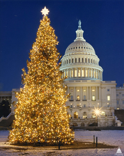 1989 U.S. Capitol Christmas Tree | by USCapitol