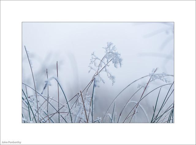 Blue Grass 24/365