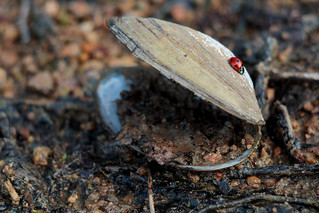 The Shell & The Ladybug | by angrykarl