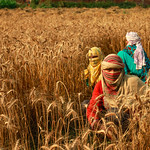 37231-023: Punjab Irrigated Agriculture Investment Program-Project 1 in Pakistan