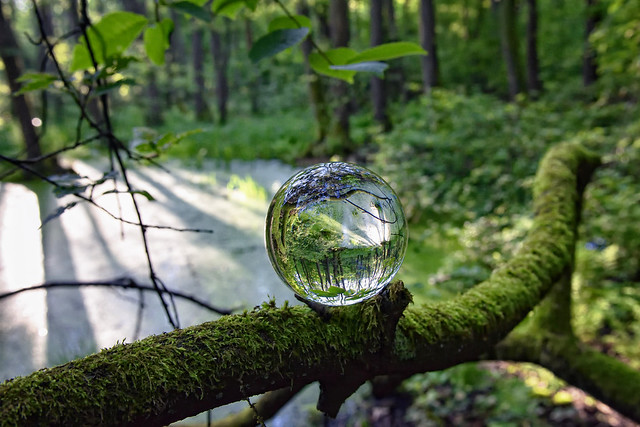 A pool and a sphere in the woods