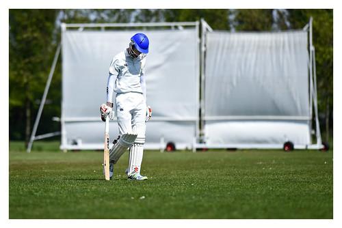 Cricket 6 | by fransmartens667