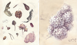 Syringa | by Lena Limkina