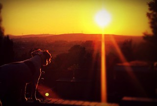Dog, contemplating the landscape beyond.   by JayMcCreary