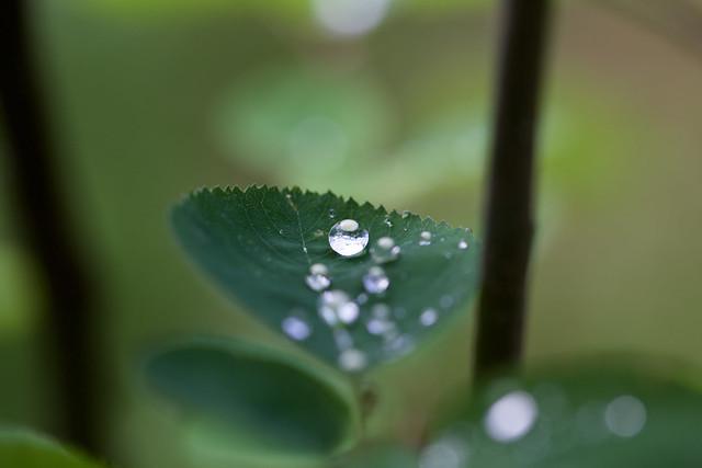 Little water droplets