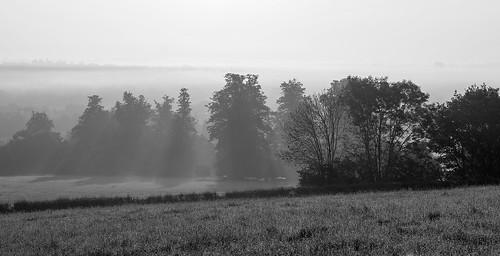 hemelhempstead misty early 6am hills trees sunshine fields countryside view scenic monochrome blackandwhite sunrise sun rays sunrays