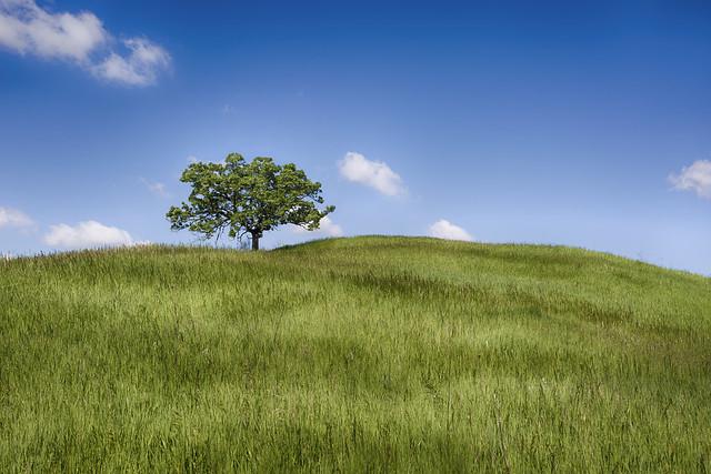Glacial Park Oak Tree