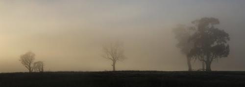 carrick tasmania tree trees fog mist morning early rural farm farmland landscape