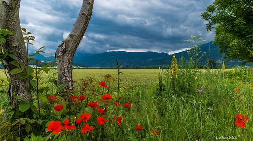 SAM_6856 | by Lubomir Boiadjiev