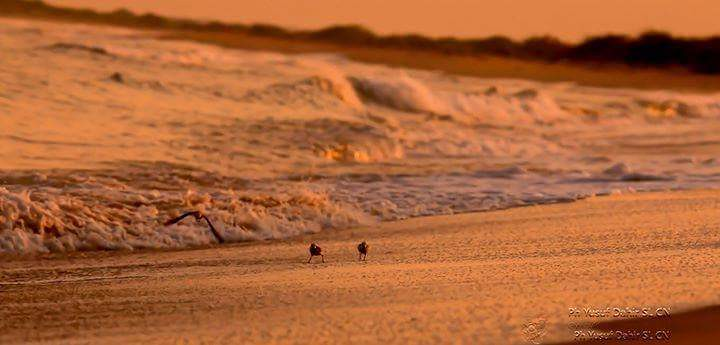 Berbera Somaliland Berbera shore