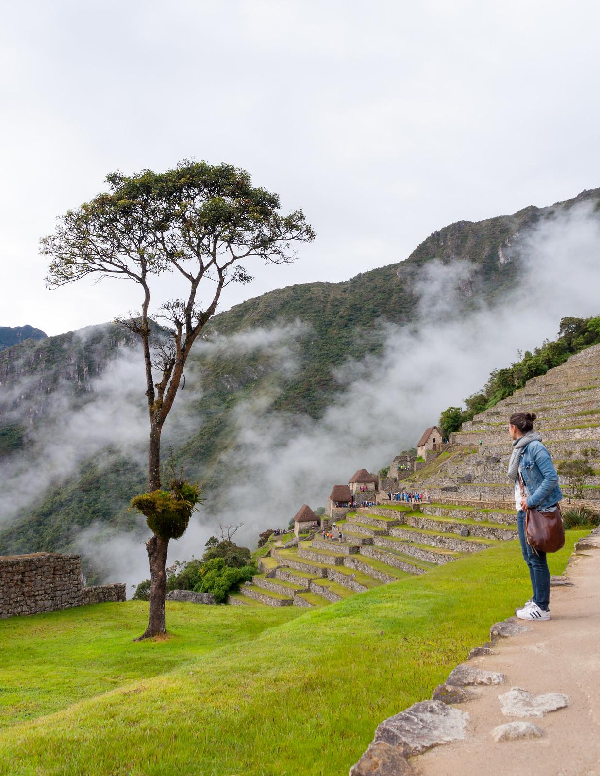Machu Picchu_086_20170428_DSC_6355.jpg