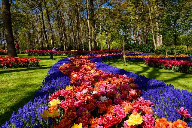 Keukenhof Gardens XII