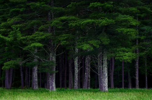 forest nature green spring outdoors woods landscape trees pine spooky newengland connecticut eastford