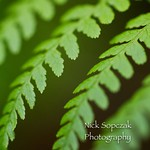 This is the smallest tiny little Fern zoomed in all the way as close as I could with the #carlzeiss #macro lens. I am having fun staying creative staying outside as much as I can throughout the day. When I'm outside more I tune into the light better and t