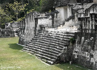 Tikal Guatemala_feistyharriet_April 2017 (5) | by FeistyHarriet