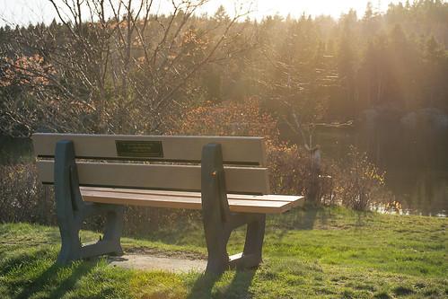 saintjohn saint john newbrunswick new brunswick rockwoodpark rockwood park bench sunset lake trees outdoors outdoor nbphoto nikond3300 d3300 nikkor