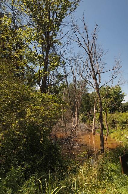 Shoal Creek wetlands