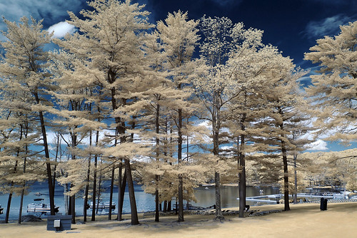 infrared woodloch 590nm