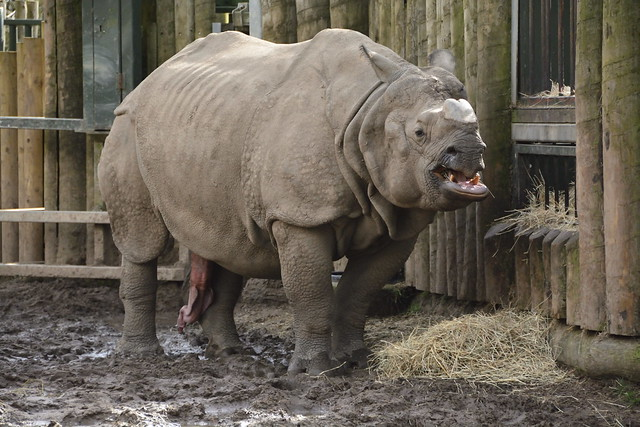 Chester Zoo (171)