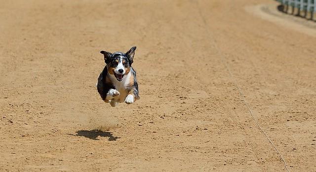 ,,Jeder Hund Rennen