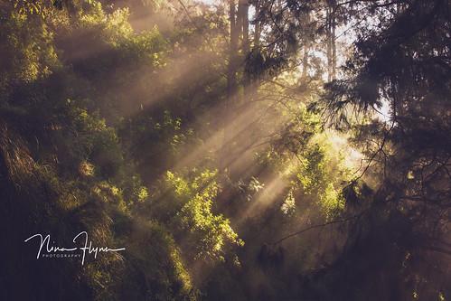 semeru sunrise sunbreak green lighting forestry indonesian ninaflynn2017 ninaflynnphotography travel adventure jungletreck backpacking