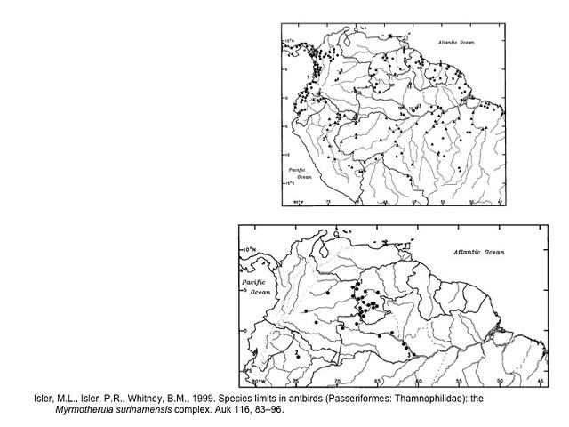 Isler et al. 1999.  Myrmotherula surinamensis taxonomy