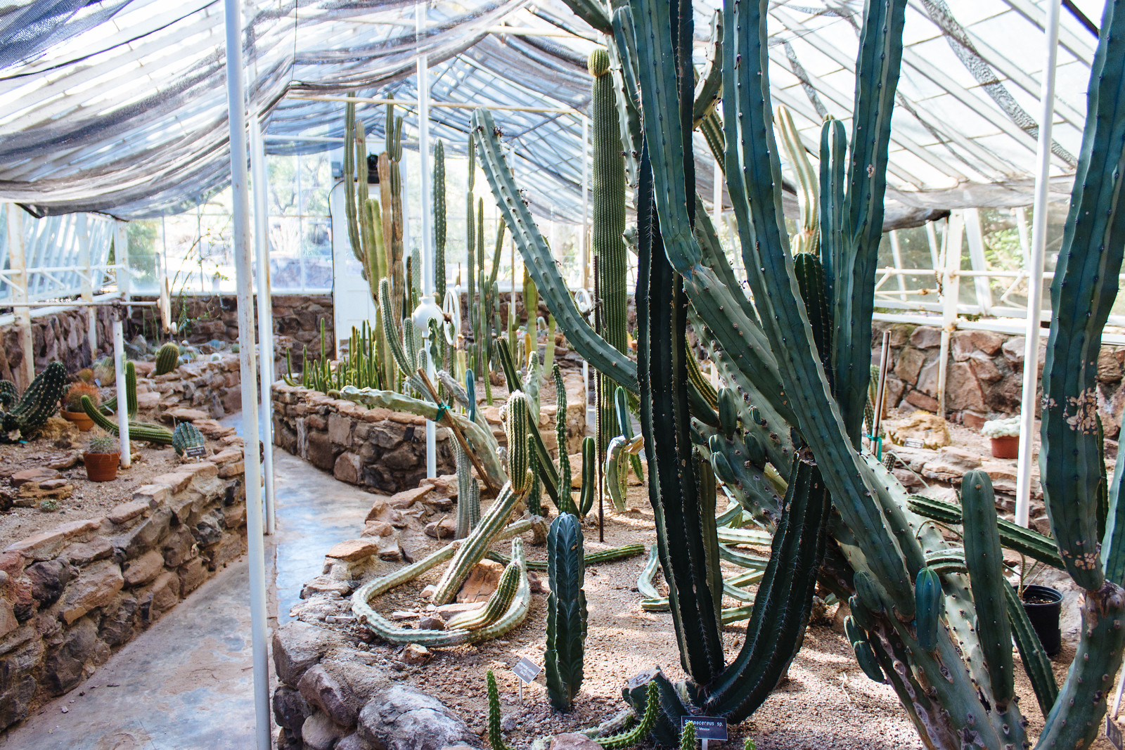 Greenhouse full of different varieties of cactus