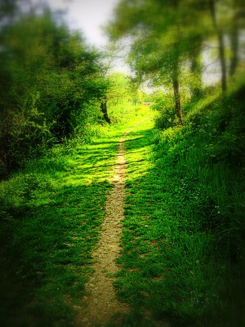 A path to serenity in my dream
