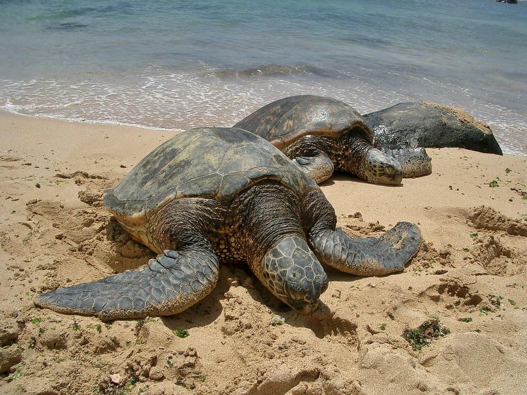 Turtle Bay, Oahu, Hawaii