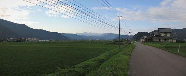 panorama, early July rice paddies