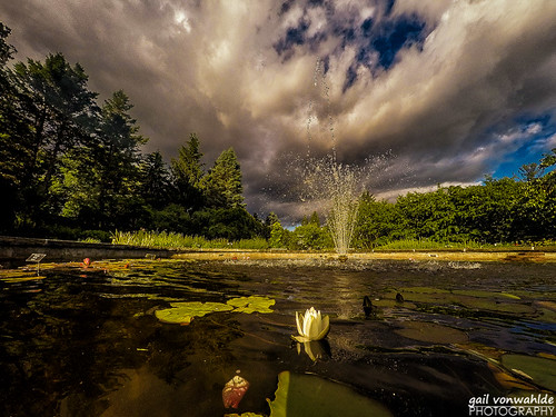 lily lilypads lilypond fountain waterfountain sky clouds water trees landscape gopro vonwahlde