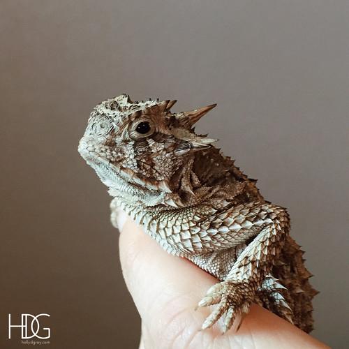 JUNEhornedfrog5   by HDGray