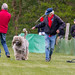 Hunderennen in Hoope 14.5.2015