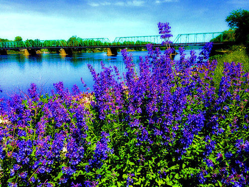 summer nature bridge bridges flower flowers landscape color colors water river outdoors spring purple reflections trees grass explore