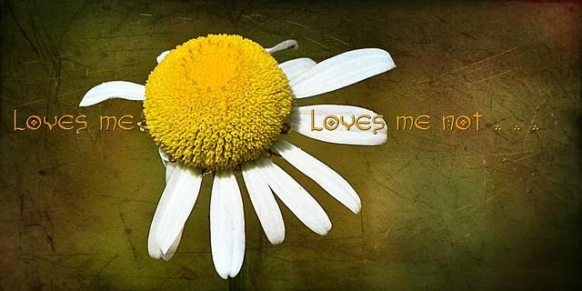 . . . loves me not