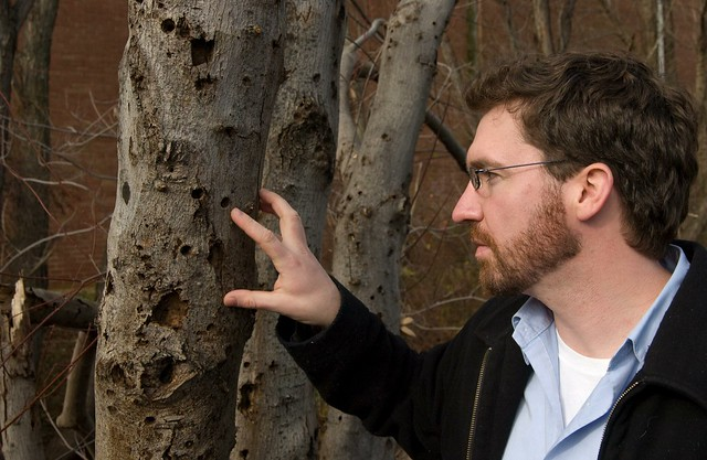 USDA's U.S. Forest Service employee, Mike Bohne, pointing to an Asian longhorned beetle (ALB) exit hole on an infested tree