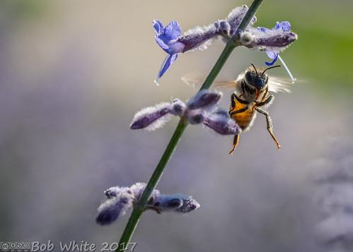 suttercounty california norcal yubacity sierracentralcreditunion landscaping flower evening bee