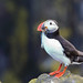 <p>Isle of May, Scotland, UK<br /> <br /> I finally got some photo time, and with none better than thousands of amazing little puffins.  So much fun!</p>