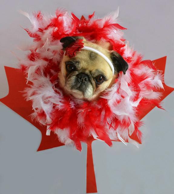 Happy 150th Canada!