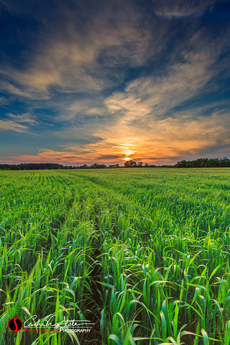 clouds discoverwisconsin farm field grass kenosha landscape place sunset travelwisconsin travelwi wi wisconsin andrewslaterphotography landscapephotography horizon unitedstates us visitkenosha canon 5dmarkiii agriculture nature pasture outdoors summer countryside country sun crop growth rural