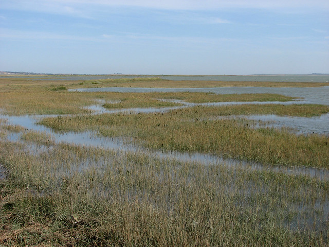 Elmley Island Marshes
