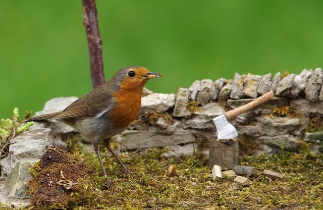 robin chopping wood (2)