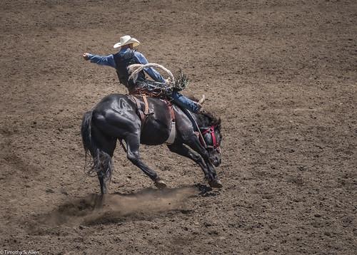 2017 calfiornia duncanmills horses riders rodeo bronco busting russian river