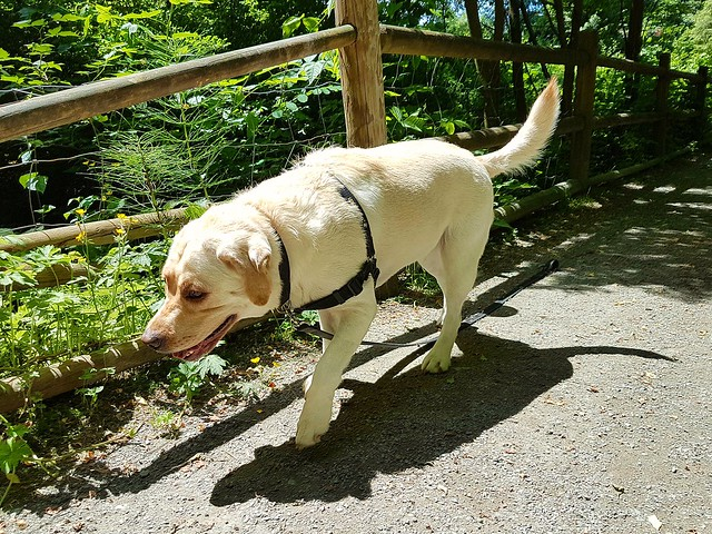Gracie on the trail